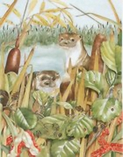 Otters B5 Main Gallery Sheila Mannes Abbot