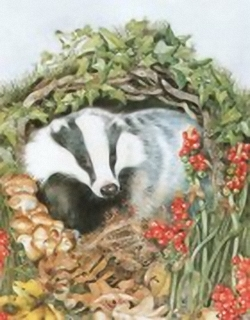 The Badger B6 Main Gallery Sheila Mannes Abbot