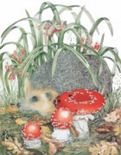 The Hedgehog B7 Main Gallery Sheila Mannes Abbot