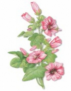 Florals B2 Main Gallery Krelis Teeuwisse