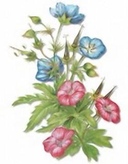 Florals B4 Main Gallery Krelis Teeuwisse