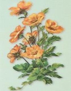 Florals C12 Main Gallery Krelis Teeuwisse