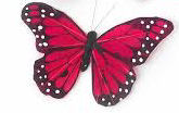 1 x CERISE --  7cm FEATHER BUTTERFLY ON 20cm WIRE . -Jacksons mail Order