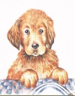 Puppy Kits HRC