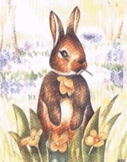 Rabbit Kits HRC