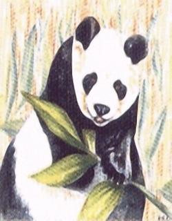 Giant Panda Kits HRC