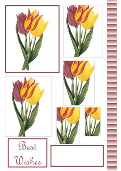 Tulip PYRAMID SHEET - Image, Border & Sentiments - Part of the Fancy Floral Range 0 -Jacksons mail Order