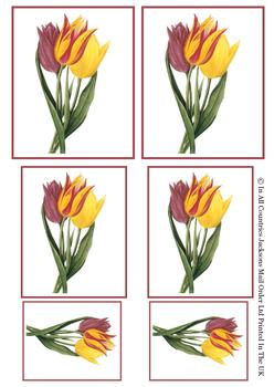 Tulip TOPPER SHEET - 6 Images Different Sizes - Part of the Fancy Floral Range . -Jacksons mail Order