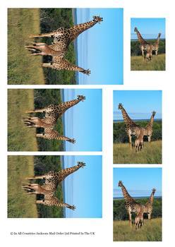 Giraffe on Safari - TOPPER SHEET - Part of the Wild Animal Range - OTHER MATCHING ITEMS - PTO99, PTO102, PTO101 . -Jacksons mail Order