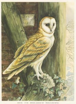 BARN OWL - Print CP1082 - by Elizabeth de Lisle - Print Size 6.2