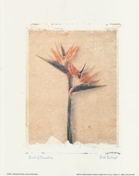 BIRD OF PARADISE FLOWER 10