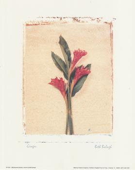 GINGER PLANT 10
