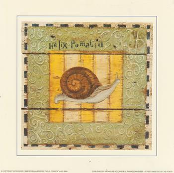 Burgundy Snail - ( Helix Pomatia ) - 7