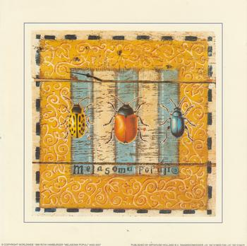 Melasoma Populi - Leaf Beetle - Card Topper 7