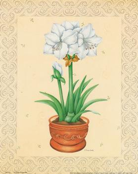 White Flower in Pot - Print by E Rosenfeld - 8