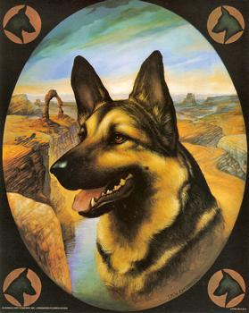 German Shepherd Dog - 8