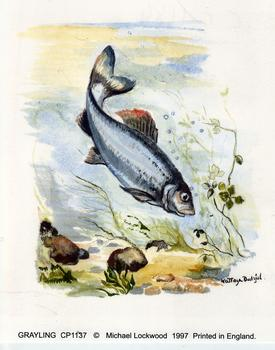 Grayling Fish - 4.5