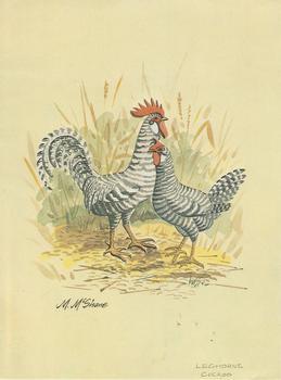 Leghorns Cuckoo - 5.75