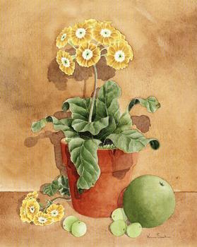 Yellow & White Phlox type flower - 10