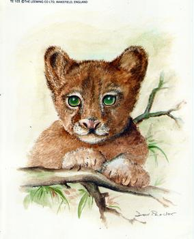 Lion Cub - 10 x 8 Print by Don Proctor *
