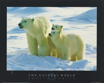ARCTIC FAMILY ** POLAR BEARS- Print from the Natural World - 10