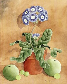 Blue & White Phlox type flower - 10