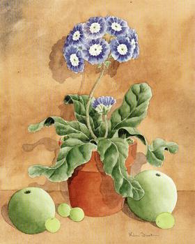 Cornflower Blue Phlox type flower - 10