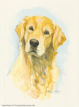 Golden Retriever Dog by Kathryn Dalziel . Kathryn Dalziel