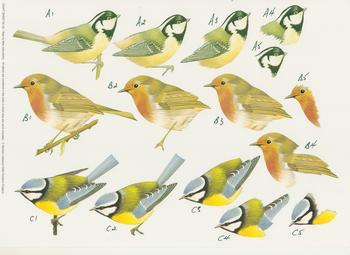 Garden Birds  - A4 Step by Step . *