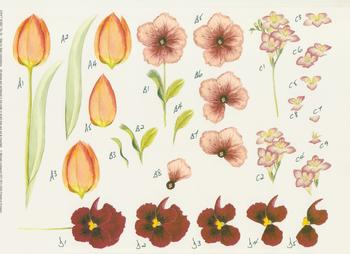 Tulip, Pansie and Crocus Flowers - A4 Step by Step Sheet *