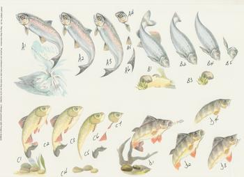 Fish - Step by Step - No 26 . -