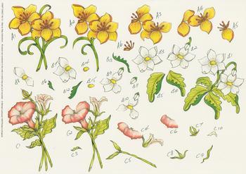 Step by Step Michael Lockwood Craft Sheet No 13 -Amaryllis Papilio , Wood Anemone , Morning Glory Flowers . -Jacksons mail Order
