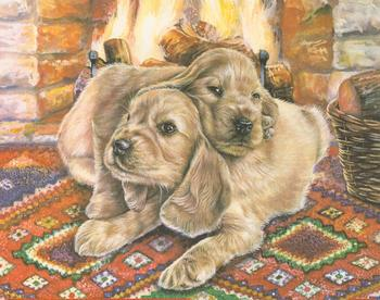 Cocker Spaniels Puppies - 10 x 8 Prints Jacksons Mail Order