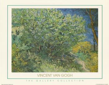 The Gallery Collection - The Trees Vincent Van Gough (JA416) papertole