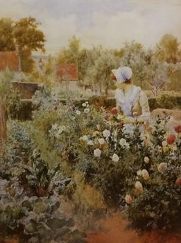 Dahlias by A Glendening 16