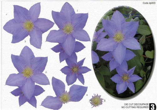 Die Cut Step by step Photopics - Clematis OUT OF STOCK Die Cuts JMO