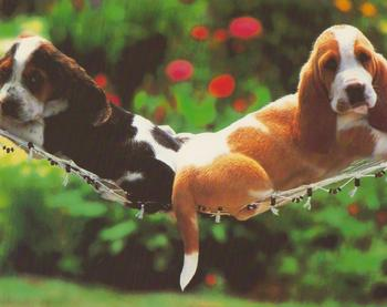 Pack of 5 - 2 Puppies Relaxing - www.papertole.co.uk