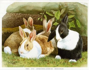 Rabbits - 9