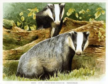 Badgers - 9