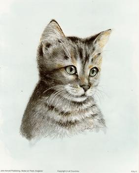 Grey Cat - 8