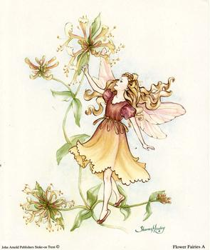 Flower Fairies Print A - 5