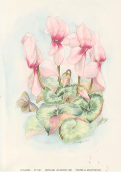 CYCLAMEN A Michael Lockwood Print ** 5