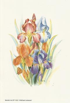 Monet's Iris - 5