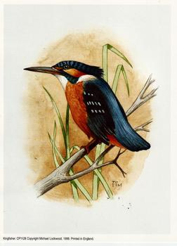 Kingfisher CP1128 - 6