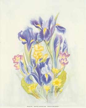 English Iris - 10x8 Print . Elizabeth De Lisle