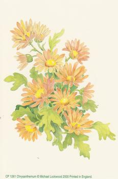 Crysanthemum Flower Print by Michael Lockwood - CP1261 - 4