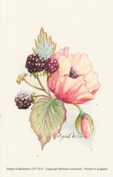 Poppy and Blackberry Flower Print by Michael Lockwood - CP1214 - 4