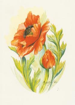 Poppies - 6