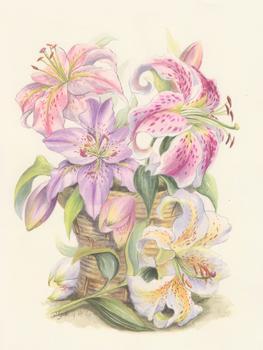 Lillies .