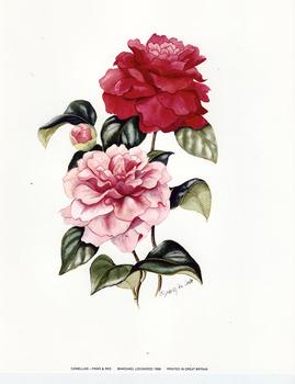 Camellias - Pinks & Red ** Print Size 8